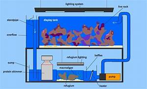 Here Is A Diagram Of A Modern Reef Aquarium With Sump And