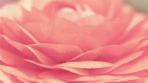 Pink Flower Close Up wallpaper - 856933