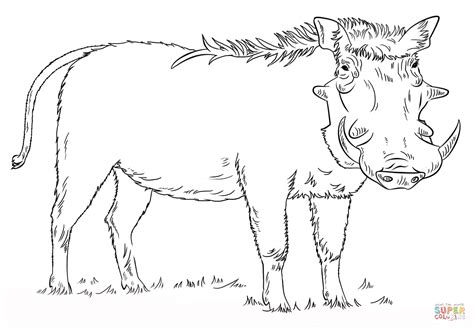 A 10 Warthog Coloring Pages Warthog Coloring Pages Coloring Pages