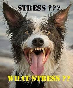 Stressed Out Dog | Die laughing | Pinterest