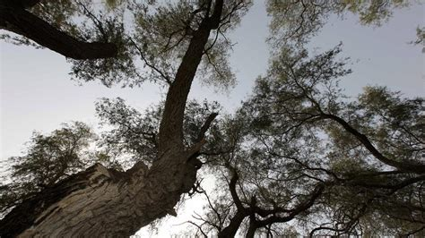 Local trees come to life in the UAE - The National