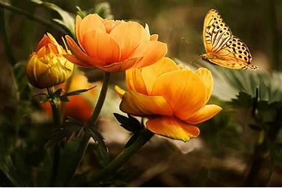 Flowers Yellow Nature Butterfly Background Flower Desktop