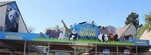 Billet Zoo De Beauval Leclerc : tarifs et vente de billets pr parez votre visite zooparc de beauval ~ Medecine-chirurgie-esthetiques.com Avis de Voitures