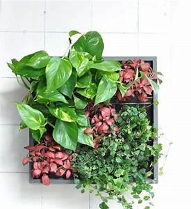 Pflanzenwand Selber Machen : pflanzenwand karoo grau im greenbop online shop kaufen ~ Whattoseeinmadrid.com Haus und Dekorationen