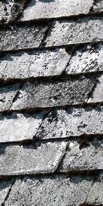 Moos Auf Gartenplatten Entfernen : moos entfernen dachreinigung und moosentfernung ~ Michelbontemps.com Haus und Dekorationen