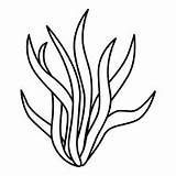 Seaweed Algas Drawing Kelp Clipart Line Simple Transparent Clip Drawings Forest Pages Ocean Algae Noun Getdrawings Preview Flower sketch template