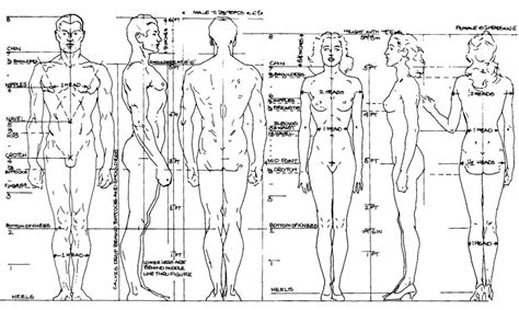 figure drawing resources  stepp