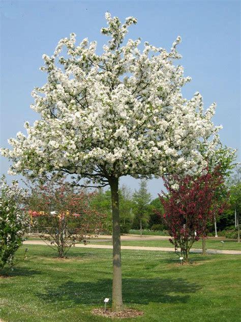 Klein Bleibende Bäume by 30 Best B 228 Ume Images On Garten Plants And Prunus