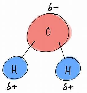 Bi U00b7ol U00b7o U00b7gy  B U012b U02c8 U00e4l U0259j U0113    Structure Of A Water Molecule