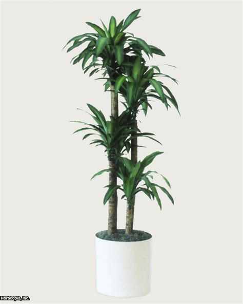 grow ls for indoor plants q a northern light for indoor trees hgtv