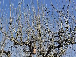 Apfelbaum Wann Schneiden : so bleibt ihr apfelbaum in form rosen str ucher b ume gartenpraxis mein garten ~ Frokenaadalensverden.com Haus und Dekorationen