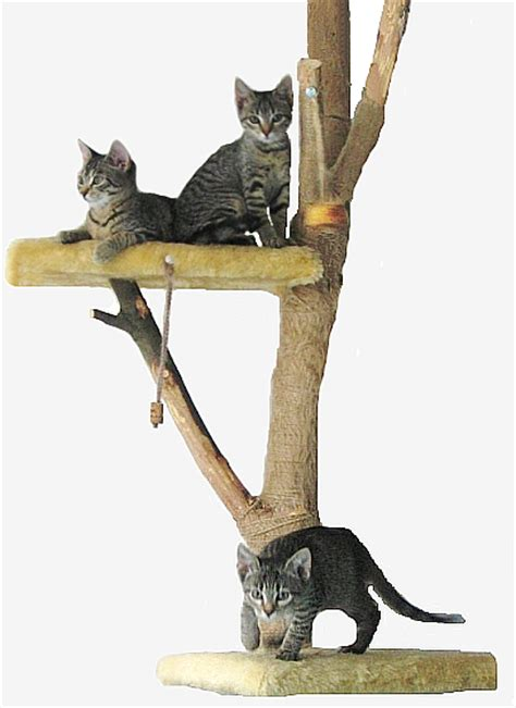 what does cat construction stand for betterhomes and gardens