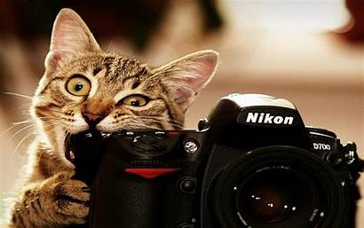 Funny Wallpapers Cat Desktop Pixelstalk Lighters