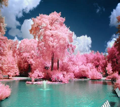 pink landscape wallpaper  venus    zedge