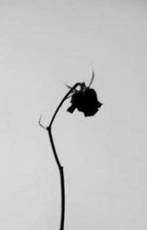 Dead rose - Wattpad