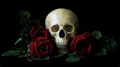 Skull Rose Wallpapers Roses Dark Background Desktop