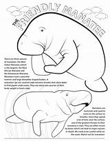 Manatee Dugong Manatees Archaicawful Azcoloring sketch template