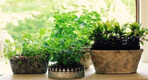 Windowsill Flower Garden by Windowsill Gardens America S Table