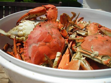 blue crab recipes  pinterest blue crab recipes
