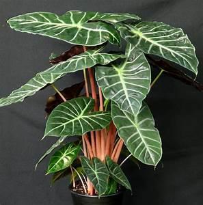 Plante Verte D Appartement : plantes vertes d 39 int rieur la nature dans notre quotidien ~ Premium-room.com Idées de Décoration