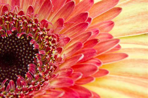 macro photography  flowers photo insomnia