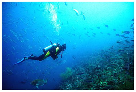 florida keys scuba diving florida keys guide