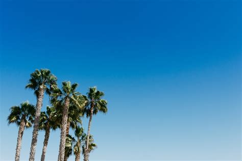 palm trees   blue sky picography  photo