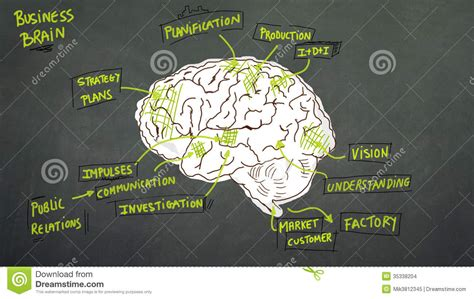 business brain stock images image