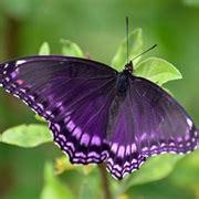 purple objects