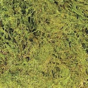 Sphagnum Moss - Tim's Reptiles
