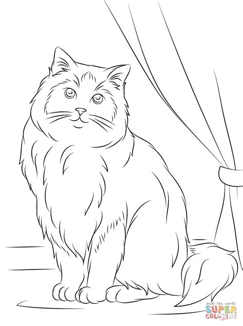 ragdoll cat coloring page  printable coloring pages