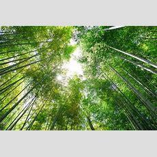 Forest Bathing (shinrinyoku) The Holistic Healing