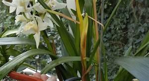 Comment Tailler Les Orchidées Pour Qu Elles Refleurissent : fiches conseils sur la taille de l orchid e ~ Melissatoandfro.com Idées de Décoration