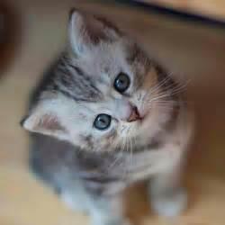 kitty cat cat kitty beautifull baby dulce yo