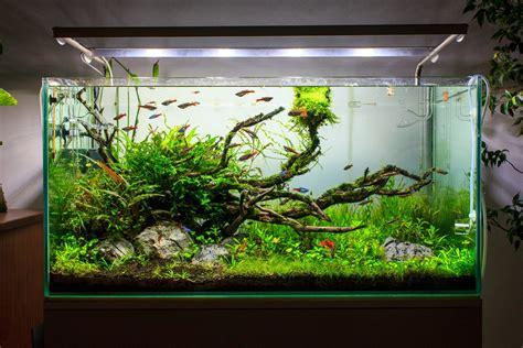 Aquascape Fish Tank by Toze Nunes Aquascape Aquarium Nature Aquarium