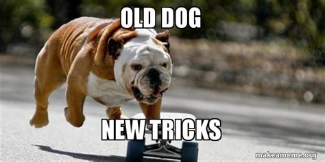 dog  tricks   meme