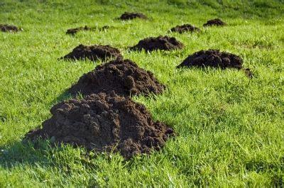 Im Rasen Loswerden by Maulwurf Vertreiben 3 Tipps Wie Sie Maulw 252 Rfe Loswerden
