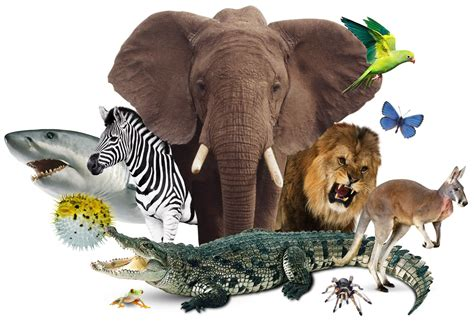 The Animal World  The Animal Kingdom  Dk Find Out