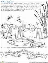 Habitat Worksheet Freshwater Pond Animal Worksheets Coloring Education Science Habitats Printable Nomenclature Water Animals Grade Printables Activities Preschool Nature Earth sketch template