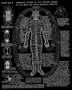 Composite Picture Of The Pattern Forces Of The Body And