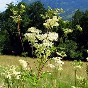 Plante Detoxifiante : plante d toxifiante liste ooreka ~ Melissatoandfro.com Idées de Décoration