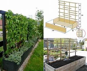 Welche pflanzen als sichtschutz fur garten und terrasse for Pflanzen als sichtschutz terrasse