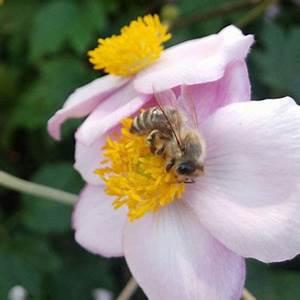 Bienen Vertreiben Essig : bl tenpollen proteine der natur ~ Whattoseeinmadrid.com Haus und Dekorationen
