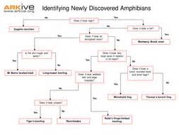 species discovery keys  classification  arkive