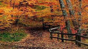 Autumn Path Through Woods HD desktop wallpaper ...