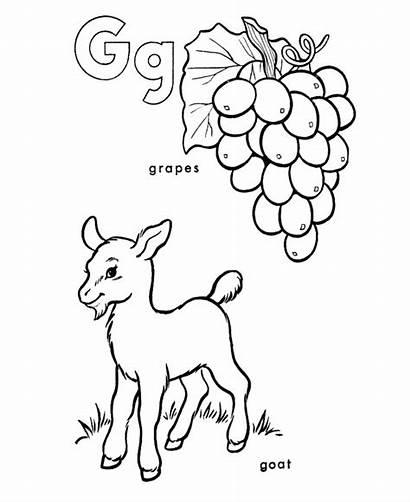 Goat Coloring Pages Alphabet Grapes Letter Abc
