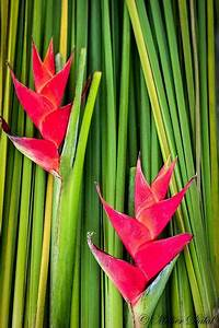 17 Best Images About Strelitzia Flowers On Pinterest The