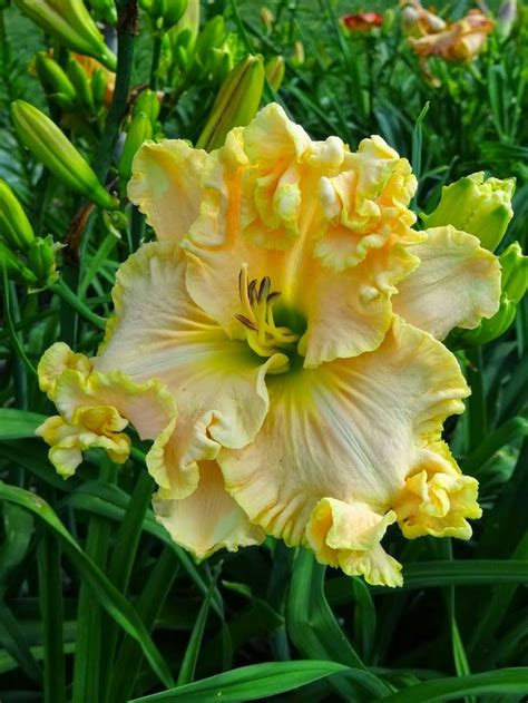 flower encyclopedia 560 best flower encyclopedia images on pinterest