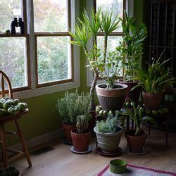 plante interieur sans lumiere am 233 nagement de jardin vos astuces sur ooreka fr page 2