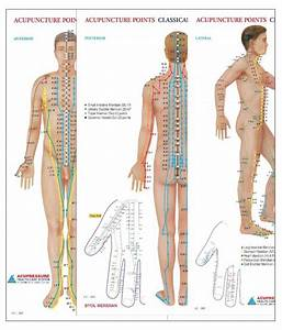 Acupuncture Points Chart Paperback English